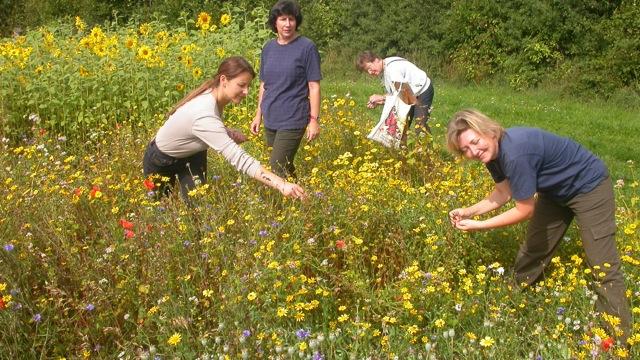 Frauen auf Blumenwiese