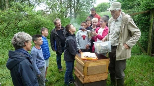 Schüler befassen sich mit Honigbienen